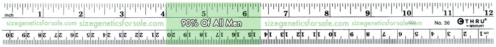 How to Measure Your Penis Size Correctly